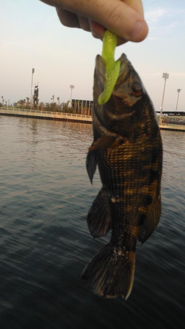 Fish ID Please-wp_000142-jpg