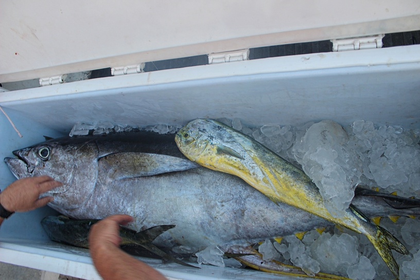 Bluewater trip out of LA-yellowfin-jpg