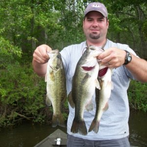 Choctawhatchee Bass
