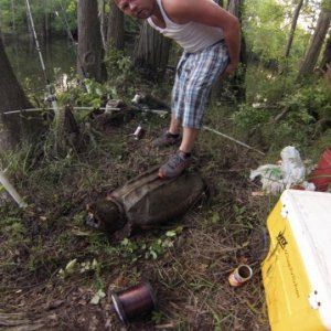 100 pound alligator snapping turtle we got while bank fishing. Google said the animal was 150 years old. That means this beast was born some time in t