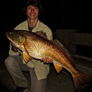 4 15 36.5'' redfish