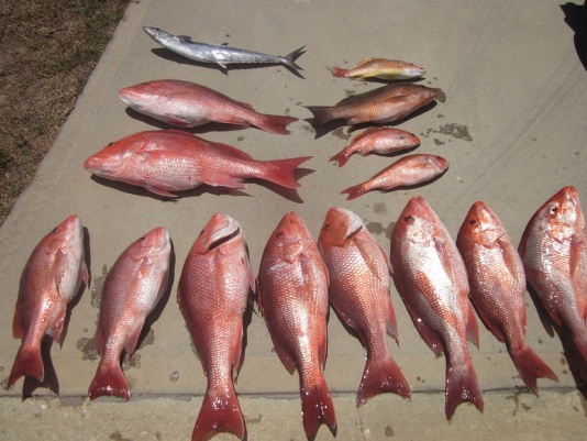 10 red, 1 mangrove, 2 lane and 1 mingo. One spanish too