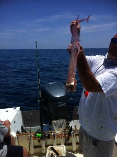 Cornet Fish 1